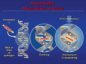 zika-amotosalen