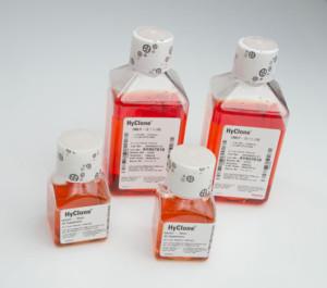 substrato di coltura per staminali embrionali