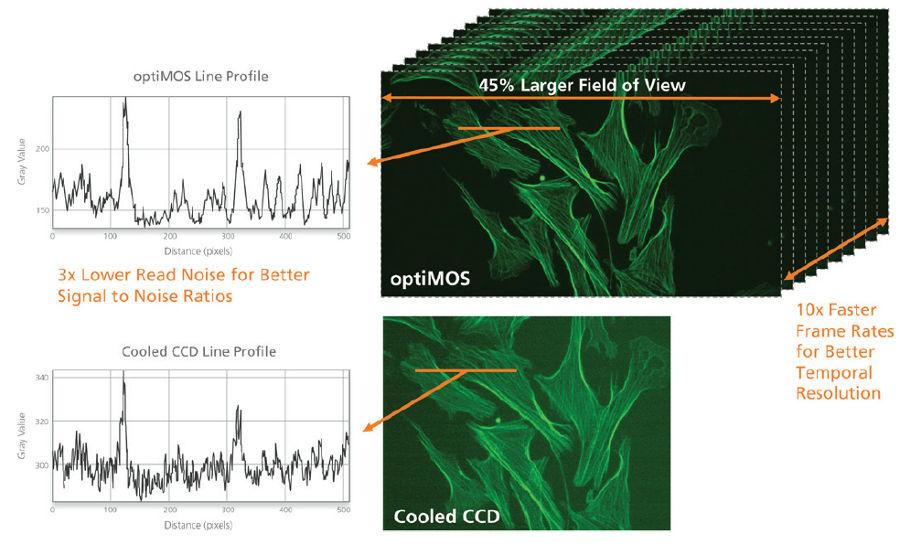 Sensori CCD e sCMOS, differenze in microscopia e imaging in biologia cellulare