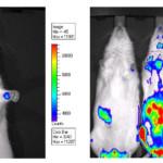 L' Imaging ottico in tossicologia promette di sacrificare meno animali