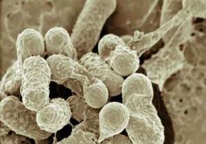 Microbiota intestinale