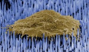 nanoneedles, struttura per acidi nucleici vasi sanguigni nei topi
