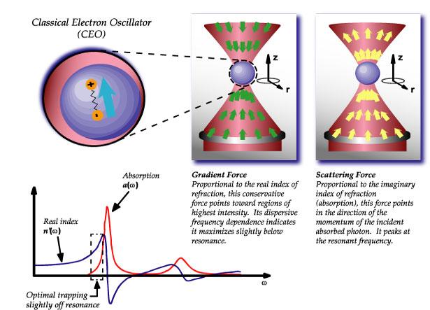 manipolazione fotoni verdi pinzette ottiche