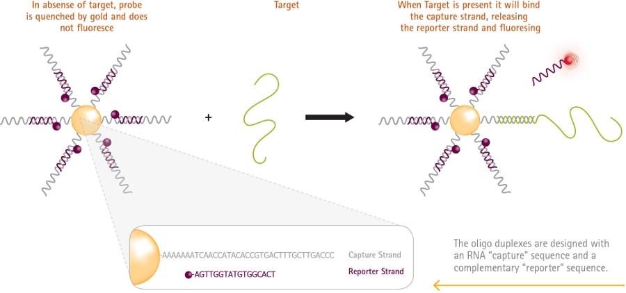 Sonde smartflare millipore per mRNA