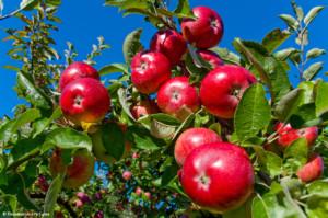 analisi del suolo frutteto hplc fenoli per fitopatologie