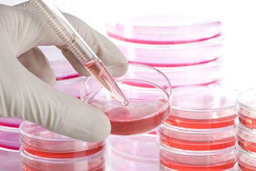 Nuovo terreno di coltura per anticorpi monoclonali su cellule CHO-S