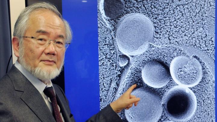 Nobel 2016 per la Medicina, cos'è l'autofagia?