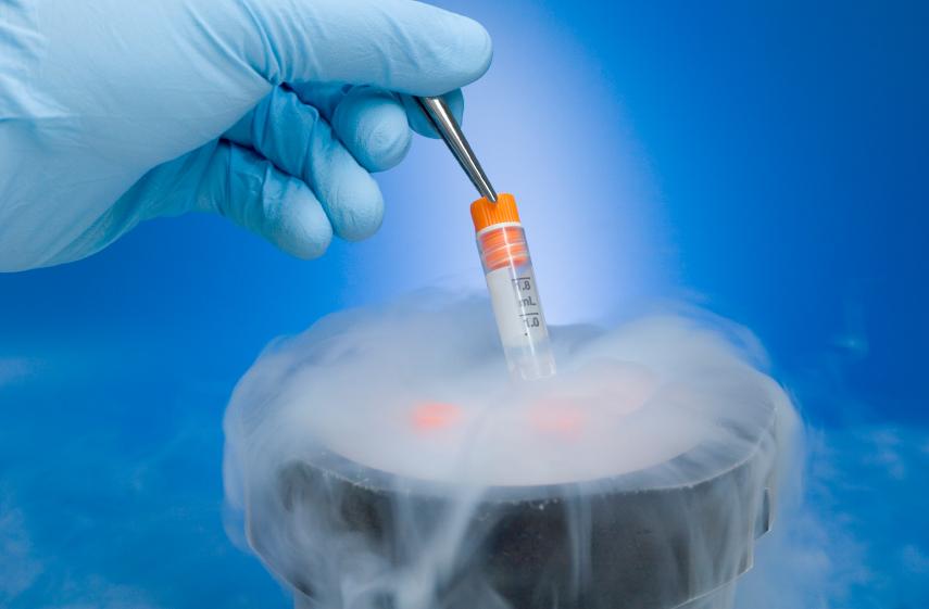Epatociti umani crioconservati, QuickRefreeze apre la strada al futuro