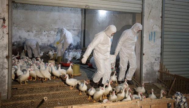 influenza aviaria h10n8 rischio pandemia