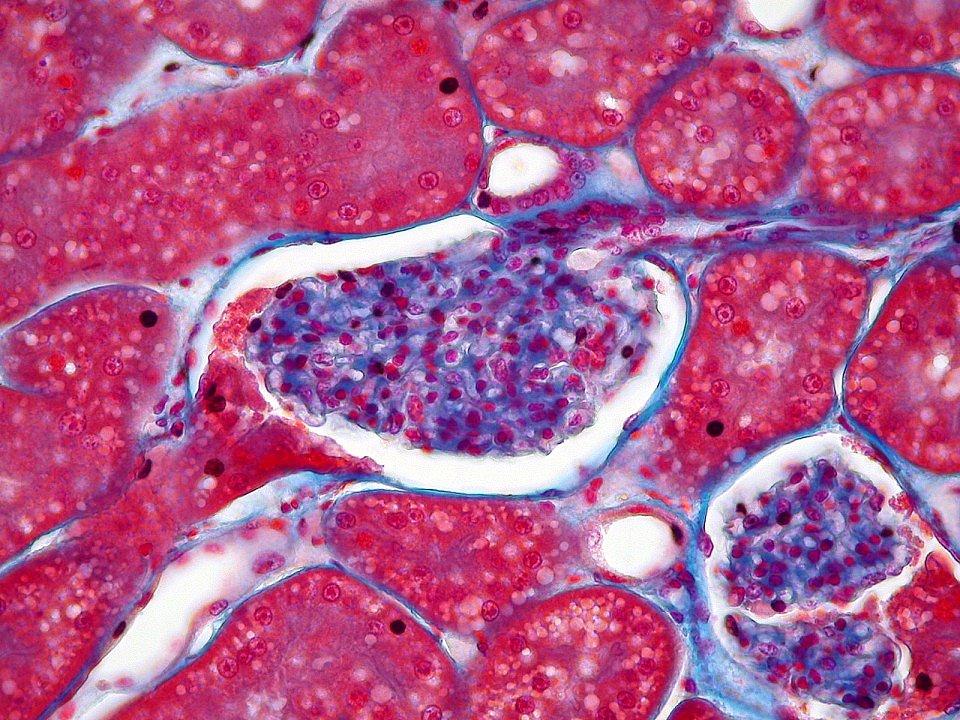 Unificare i formati per la microscopia, online c'è Open Microscopy