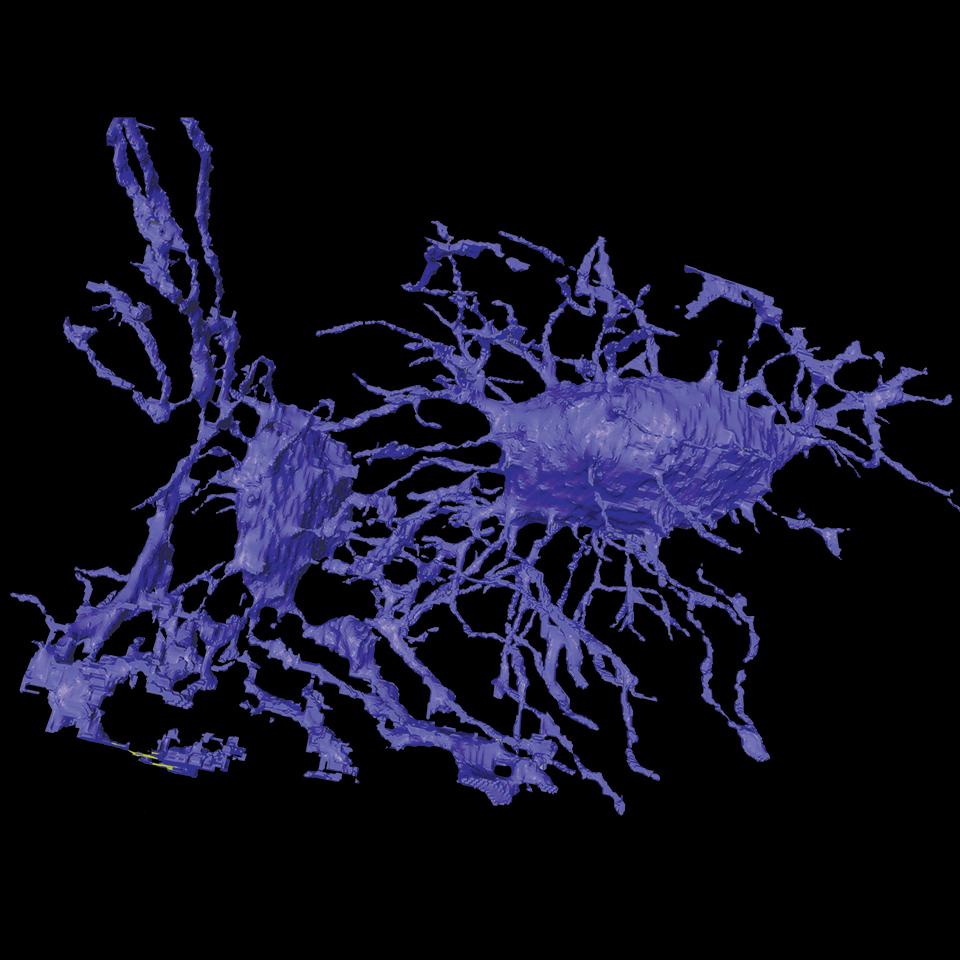 tomografia 3d osteociti zeiss Xradia Ultra