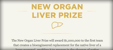 premio fegato staminali